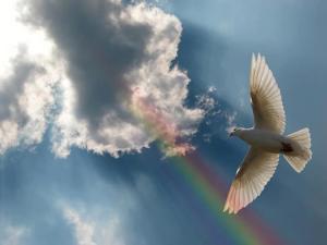 dove and rainbow PIQ